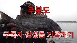 [FISHING]감성돔낚시 feat.구독자 기록어 갱신…
