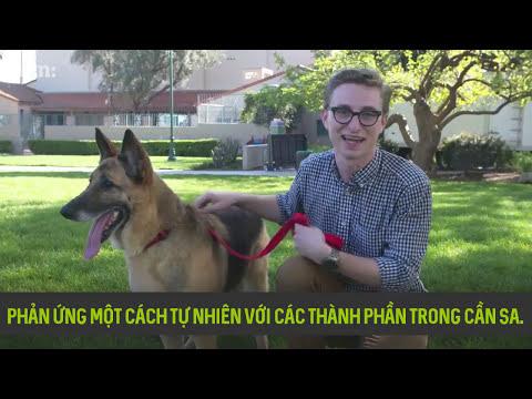 Cần Sa Y Tế trên thú cưng