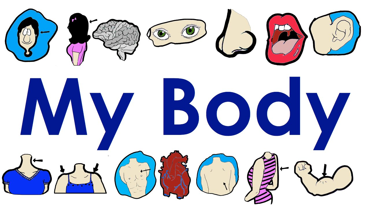 Parts Of The Body Vocabulary Practice Easy English Practice