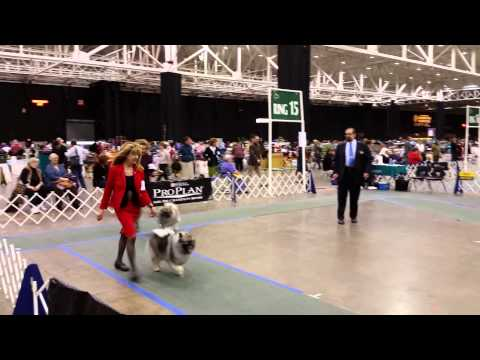IX Center Dec 12, 2014 Keeshond ring Breed #2 video