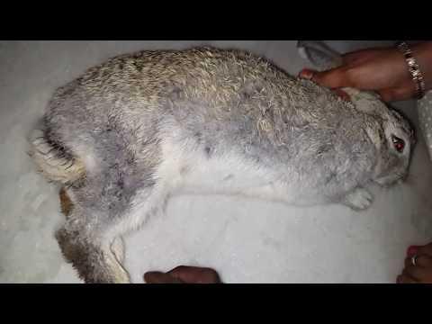 Baby Rabbit Drinking Milk From Mom Rabbit Youtube