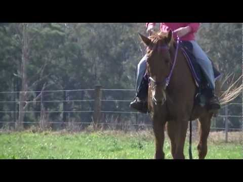 Horse For Sale NSW