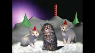 cicha noc - koty