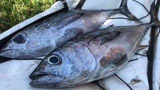 CATCH & COOK: Blackfin Tuna (Sashimi)