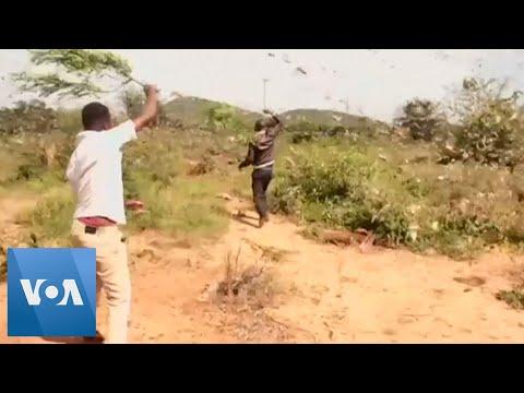 locust-swarms-threaten-east-africa's-food-security