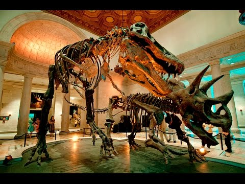 Courtney and Mike\'s wedding at the Los Angeles natural history ...