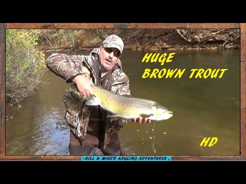 King salmon huge brown trout at oak orchard youtube for Oak orchard fishing report