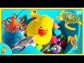 Learn Ocean Sea Animals in Swimming Water by Squishee Nugget