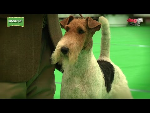 WELKS Championship Dog Show 2017 - Terrier group - Shortlist