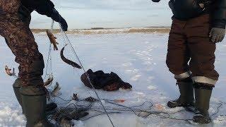 Нашли заброшенную сеть с рыбой. МОНСТРЫ