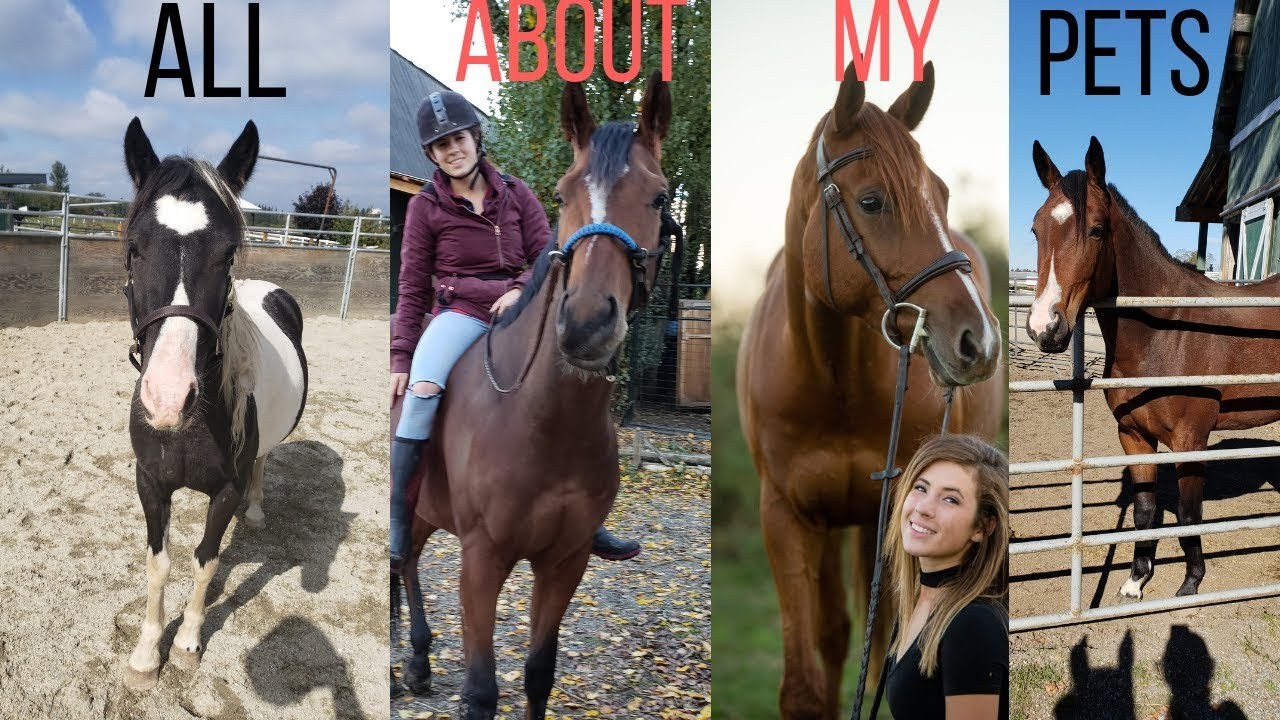All About ALL of My Horses/Pets