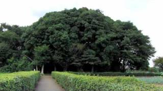 小手指原古戦場跡 | 北野 | 所沢市 | 埼玉県
