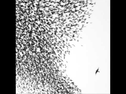 wilco - either way