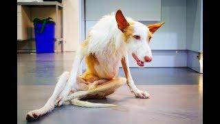 perrito-con-la-columna-vertebral-partida-porque-no-cazaba-no-te-pierdas-el-final