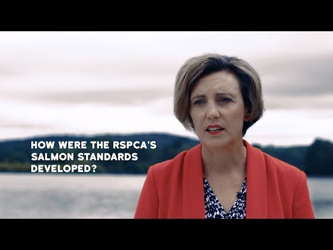 How were the RSPCA's salmon standards developed?