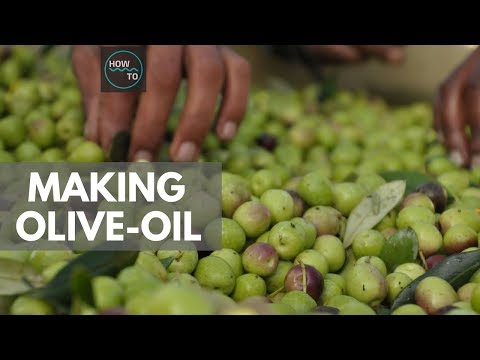 Making Of Olive Oil On A Large Scale | How To