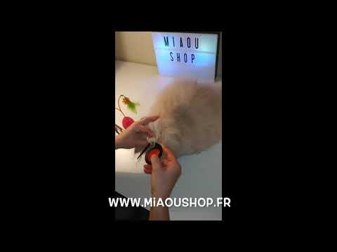 Coupe Noeud Pour Chat Et Chien Www Miaoushop Fr