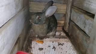 Кролики моей мини фермы и капризы с  тыквой)))