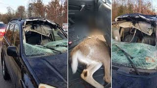 Deer crashes through woman's windshield on Rt. 9 in Howell Township