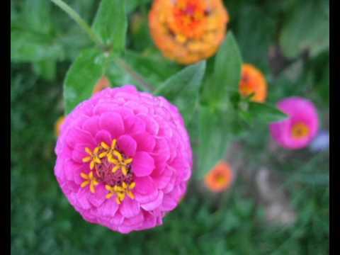 Глория Мур. Музыка цветов.