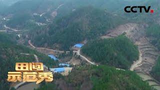 《田间示范秀》养鸡高手来助阵 拯救大别山中的土鸡场 20200422 | CCTV农业