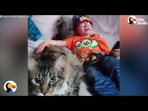 Longest Cat In The World Helps Brother With Autism | The Dodo