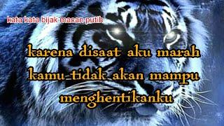 Download lagu kata kata bijak macan putih!!! (jngan kau usik pendiam)