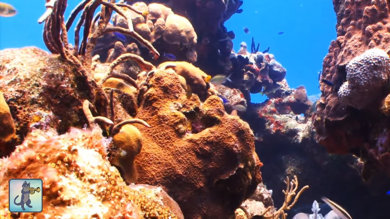 underwater marine life coral reef fish ocean fish aquarium