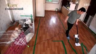 EBS 스페셜 프로젝트 - 세상에 나쁜 개는 없다 2부-갈갈이 자매와 소심한 효리/침 흘리는 겁쟁이 복실이_#001