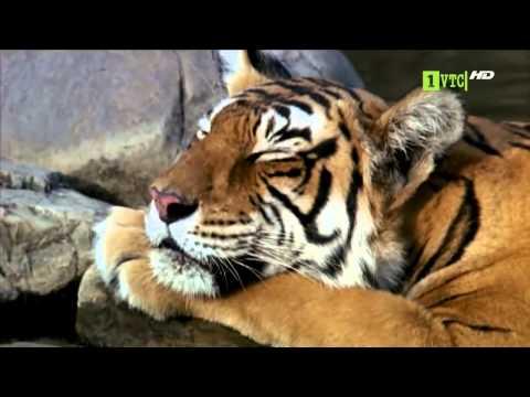 The animal world♥ Wildlife India ♥  Wild animal ♥♥ The Mysteries of Nature♥♥  Wildlife♥♥