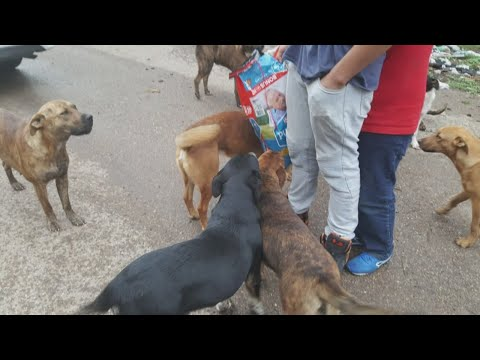 25 dogs rescued from Mescalero Apache reservation along Highway 70