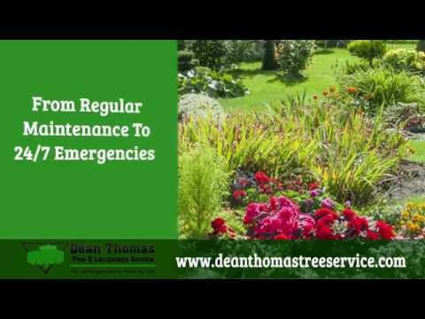Dean Thomas Tree Service Pittsburgh Pa 15216