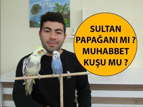 Sultan Papağanı mı Muhabbet Kuşu mu Almalıyım