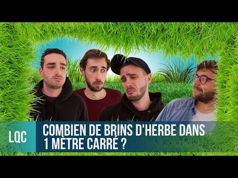 LQC - Combien de brins d'herbe dans 1m² de pelouse ?