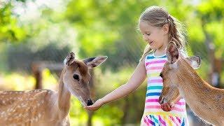 Голоса животных зоопарка для детей