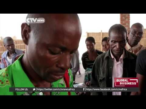 Malawian fish traders use solar tents to dry their catches