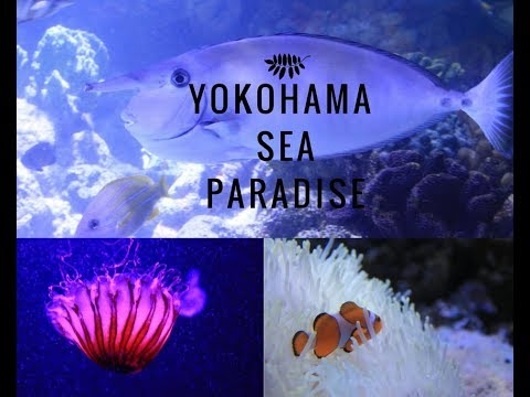 Yokohama|Sea paradise | Travel japan| AQUA resort|
