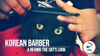 Korean Style Cat KoreanBarber Barbershop Korea Gato Cat's Cat at Barber