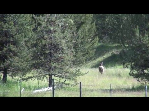 Starkey Elk Research:  Past, Present, & Future