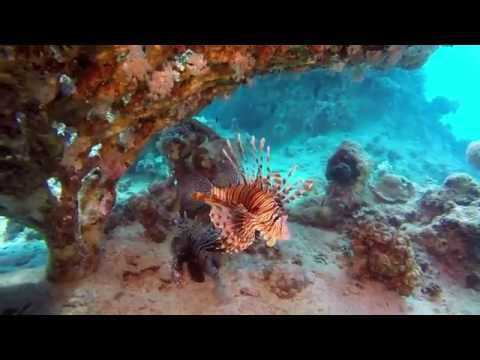 MAKADY BAY DIVING RED SEA EGYPT  SpiritDiver  HD
