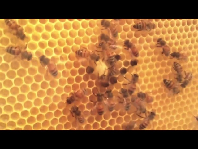 Diy Observation Hive Cheap Beekeeping