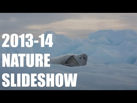 Antarctica Expedition 2013-14: Antarctic Peninsula Nature Slide Show