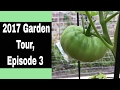 2017 Backyard Garden Tour, Episode 3