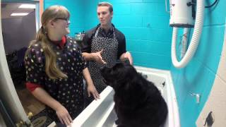 DAY IN THE LIFE DOG GROOMER