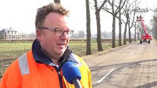 Honderd bomen langs Jagtlusterallee bij Nieuwleusen tegen de vlakte