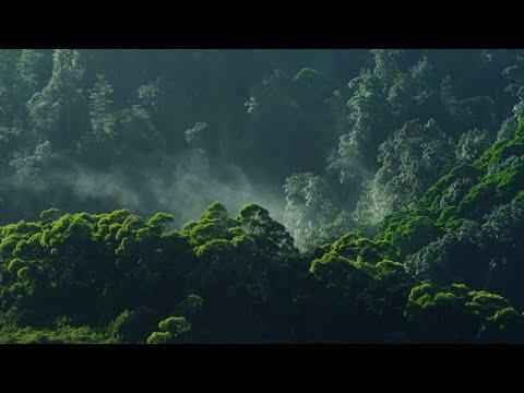 The Huon Pine