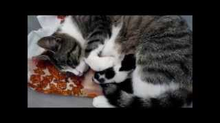 Überraschung meiner Katze ... Katzenbabys !!