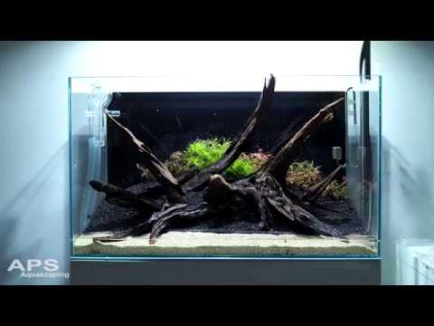Dutch-Hybrid Style Aquascape: Planting Timelapse + Final State