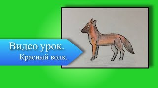 Как нарисовать красного волка / Видео урок / PonArt /