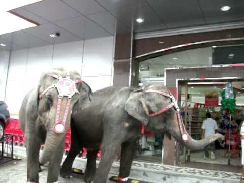 Panama elephants promoting a supermarket